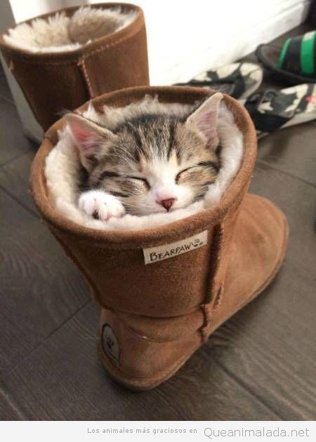 Fotos graciosas gatos metidos en sitios 9