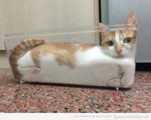 Fotos graciosas gatos metidos en sitios 10