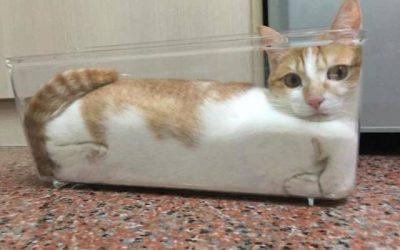 10 gatos que dicen: ¡SI QUEPO, ME METO!