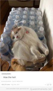 Fotos graciosas gatos metidos en sitios