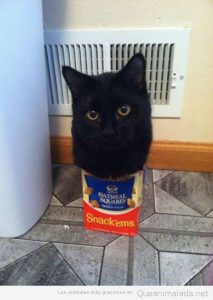 Fotos graciosas gatos metidos en sitios 3