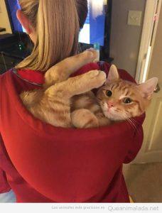 Fotos graciosas gatos metidos en sitios 4