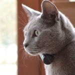 ¿Conoces los GPS para gatos?