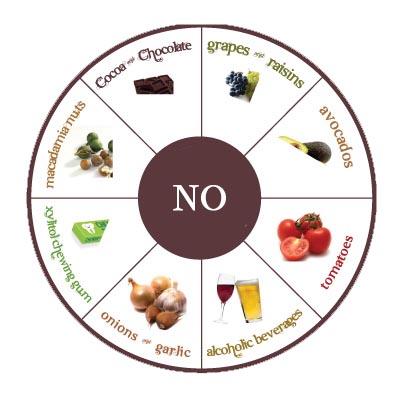 Consejos para mejorar la dieta de tu perro