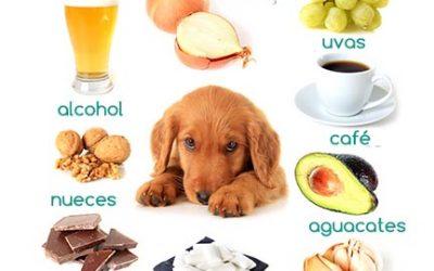 Alimentos tóxicos para perros que nunca deberían comer
