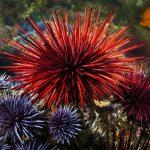 10 ejemplos de animales invertebrados