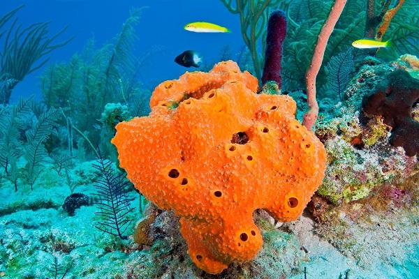 Animales invertebrados, esponja de mar