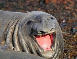Foto graciosa de un animal poco fotogénica