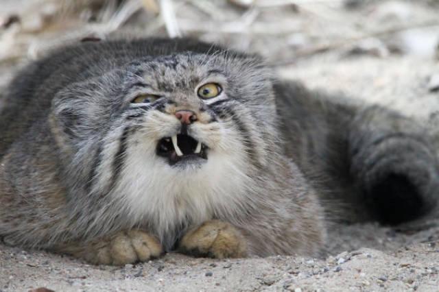 Los 10 animales menos fotogénicos del planeta