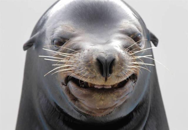 Foto graciosa de una foca poco fotogénica