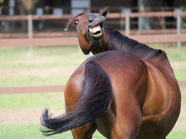 Foto graciosa de un caballo poco fotogénico