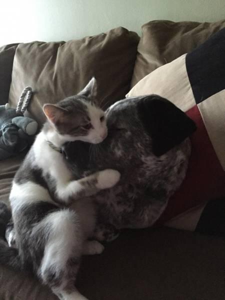 Fotos graciosas relación perros y gatos 4