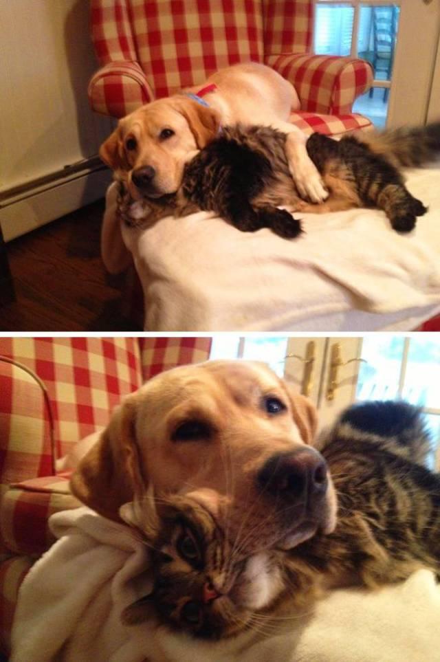 Fotos graciosas relación perros y gatos 14