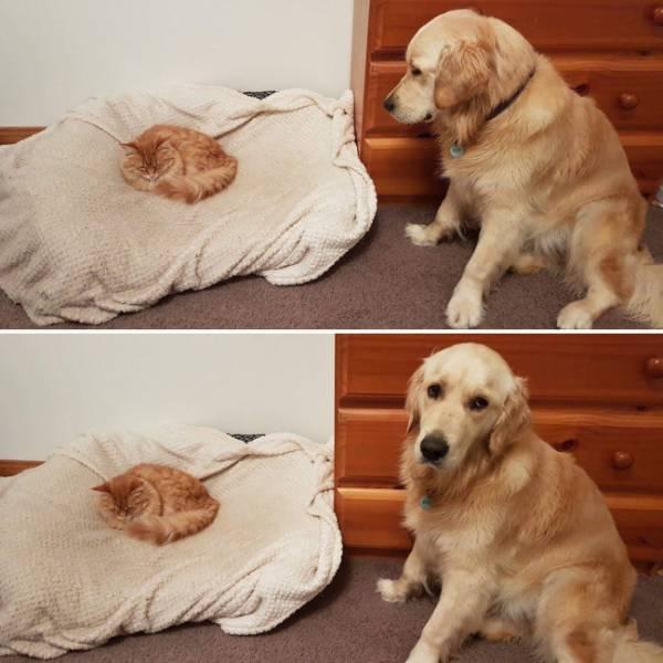 Fotos graciosas relación perros y gatos 15