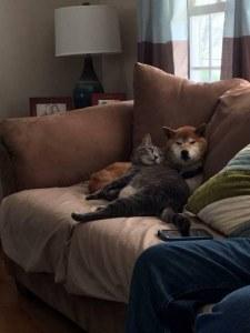Fotos graciosas relación perros y gatos 16