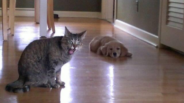 Fotos graciosas relación perros y gatos 17