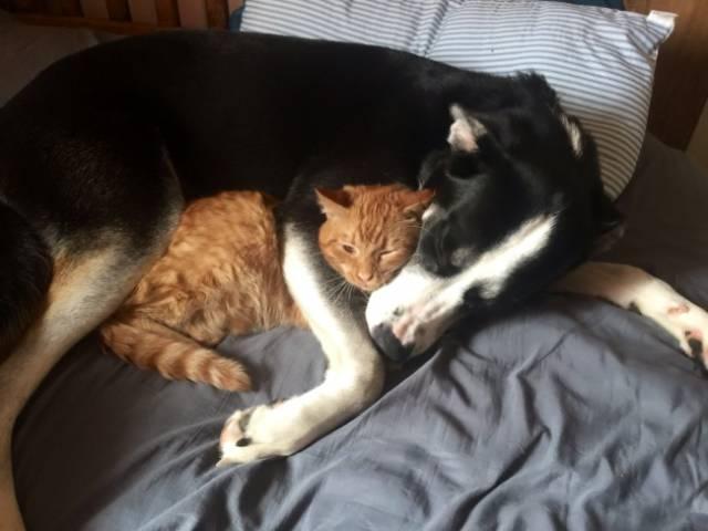 Fotos graciosas relación perros y gatos 18