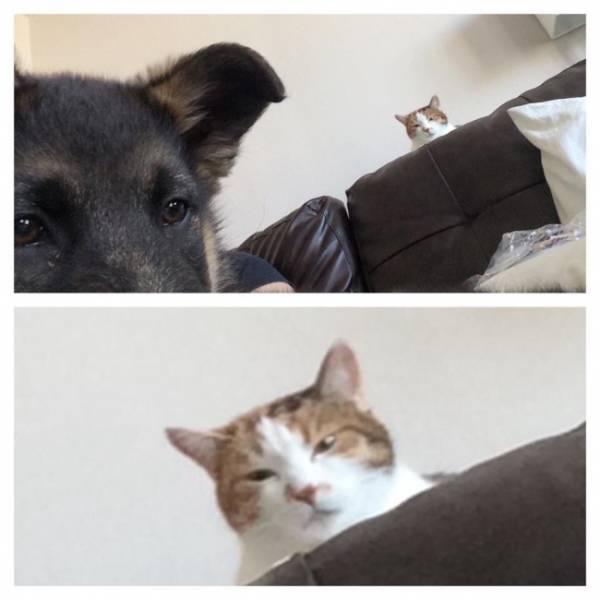 Fotos graciosas relación perros y gatos 19