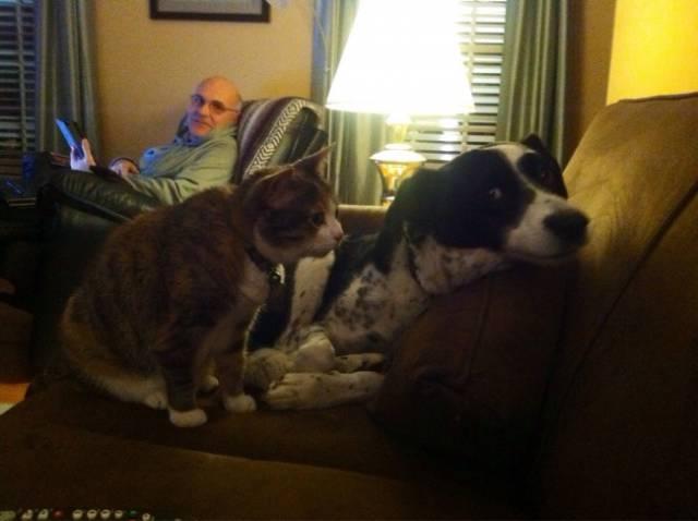 Fotos graciosas relación perros y gatos 20