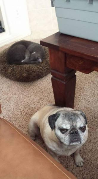 Fotos graciosas relación perros y gatos 9