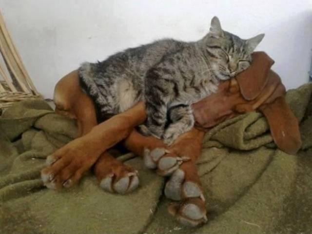 Fotos graciosas relación perros y gatos