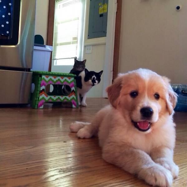 Fotos graciosas relación perros y gatos 2