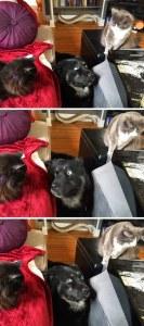 Fotos graciosas relación perros y gatos 3