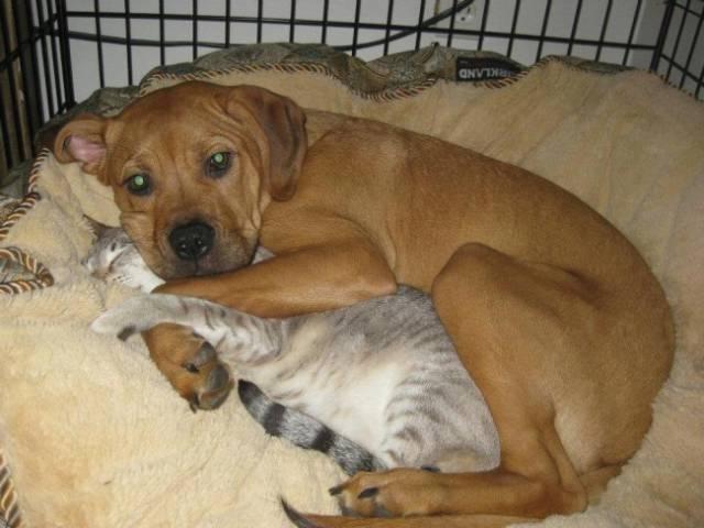 Fotos graciosas relación perros y gatos 7