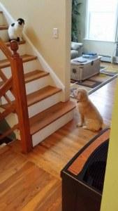 Fotos graciosas relación perros y gatos 8