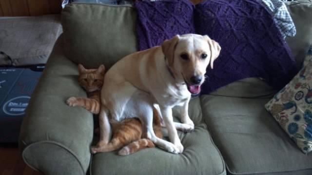 La relación entre perros y gatos puede ser de lo más explosiva!