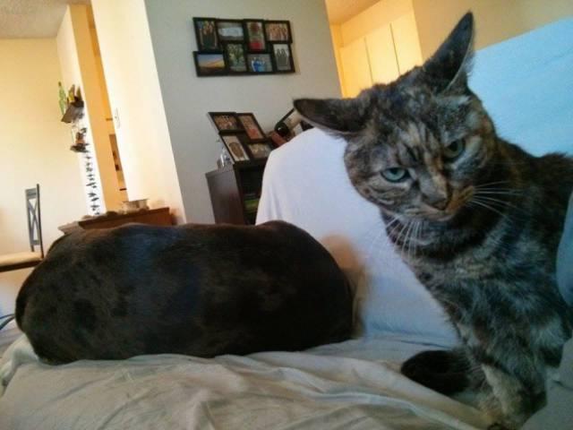 Fotos graciosas relación perros y gatos 11