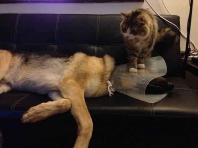 Fotos graciosas relación perros y gatos 12