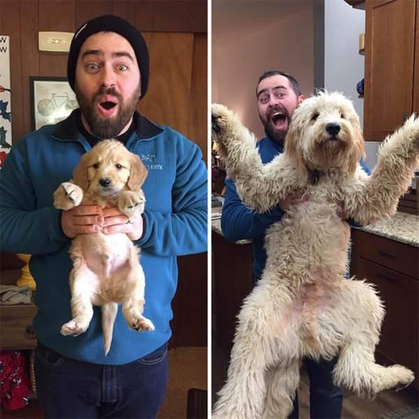Perros de cachorros a adultos con sus dueños ¡Cómo crecen!