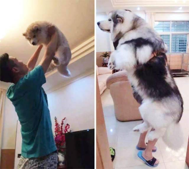 Perro de cachorro a adulto 11