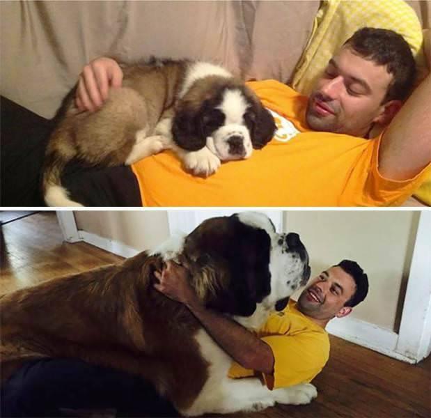 Perro de cachorro a adulto