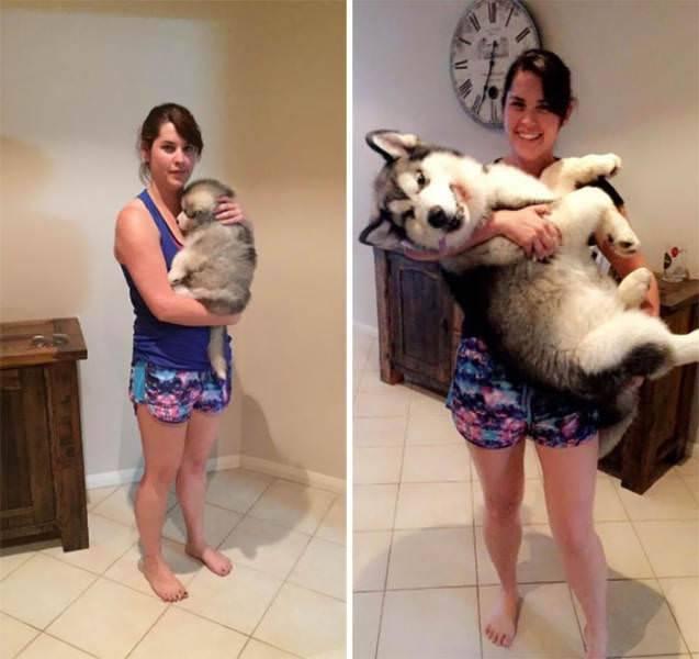 Perro de cachorro a adulto 2