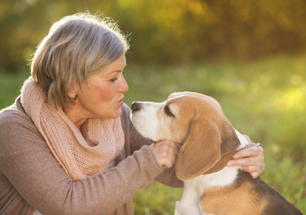 Mejores razas de perro para personas mayores, Beagle