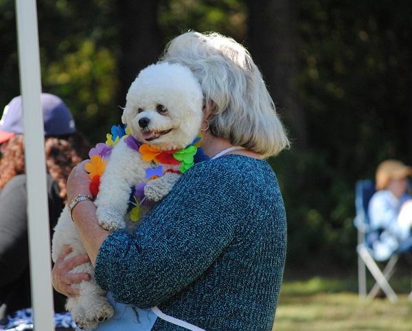 Mejores razas de perro para personas mayores,Bichón frisé