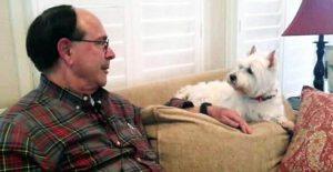 Mejores razas de perro para personas mayores, Westie