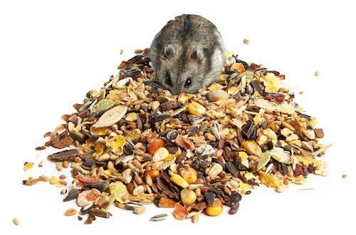 Comida para hamsters