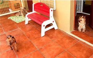 Residencia canina Sevilla Petjilton 4