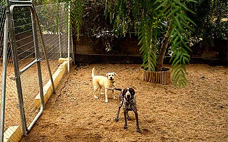Residencia canina Sevilla Petjilton 2