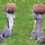 Los animales más raros del planeta (Vídeos)