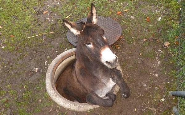 Animales atascados en sitios extraños 9