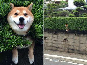 Animales atascados en sitios extraños 11