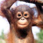 10 Animales salvajes bebés: ¡qué cosas más lindas!