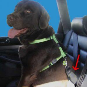 Adaptador cinturón seguridad para perros