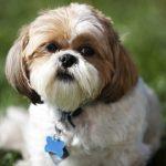 Chapas para perros: identifica a tu mejor amigo para que nunca se pierda