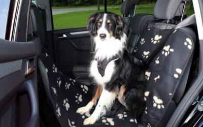 Accesorios para viajar con perros en coche