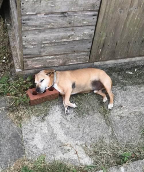 Foto graciosa de perro durmiendo en un ladrillo